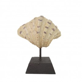 Scallop Shell on Stand