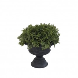 Buxus Ball Potted Tree