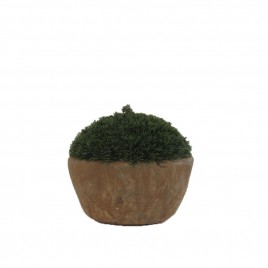 Moss Potted Tree