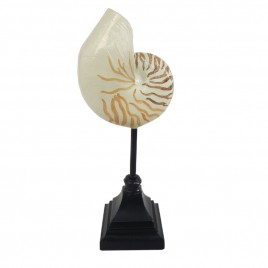 Nautilus Shell on Stand