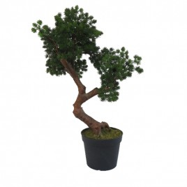 Bonsai Tree (L)