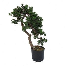 Bonsai Tree  (XL)