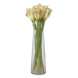 Calla lilies flower
