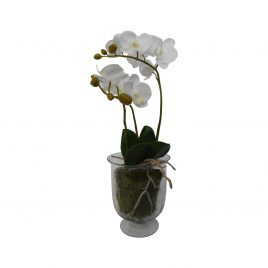 White Orchid in a root ball