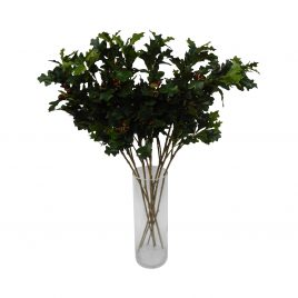 Boxwood leaves Branch