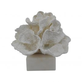 White Coral Display on Base