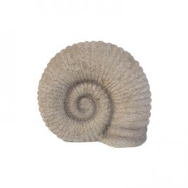 Nautilus Fossil Shell Sculpture