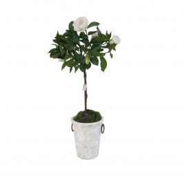 English Rose Potted Tree