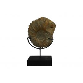 Small Fossil (Atlas Mountains)