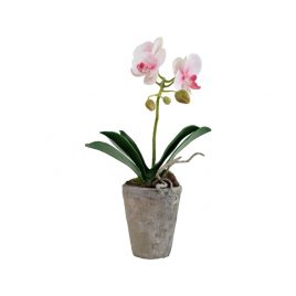 Orchid in a clay pot